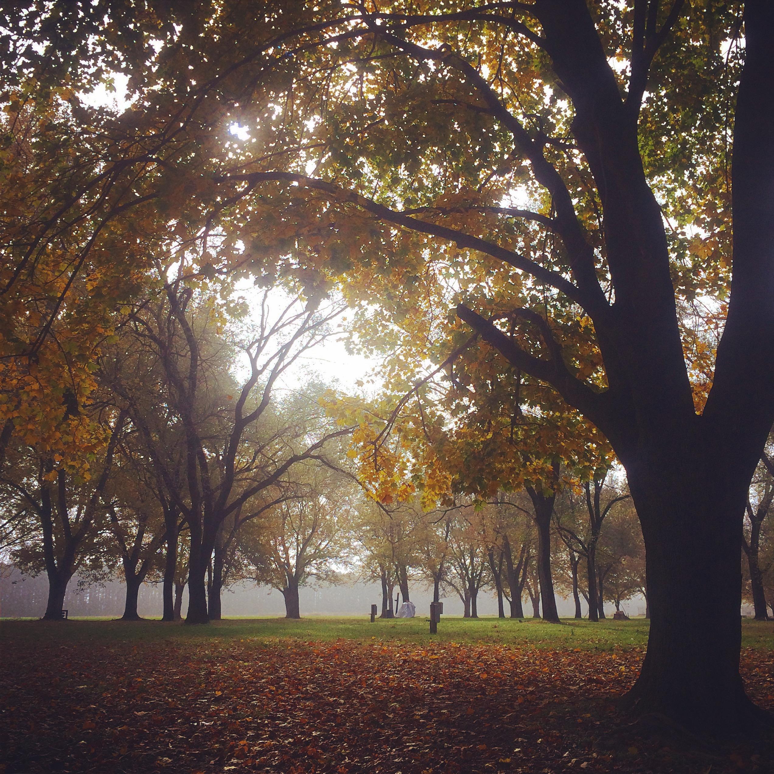 Fall_trees